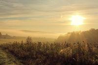 Ein Morgen im Odenwald