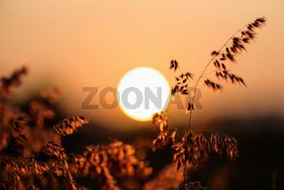 Sun at sunset in field flower grass