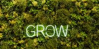 Grow Header Hintergrund mit grünen Pflanzen