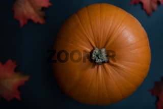 Top view of big decorative orange pumpkin on clean modern dark blue background with red autumn foliage as festive holiday decor for thanksgiving or halloween