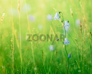 Summer Grass And Flowers