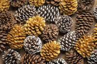 natural, gold and frosty white pine cones