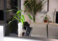 Plant in vase, home decoration