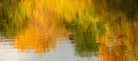 Reflection of autumn yellowed wood in water.Beauty of Autumn.Panorama view.