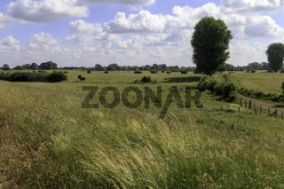 Landschaft bei Rees, Niederrhein, NRW
