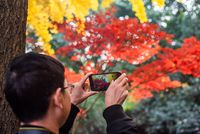Young man taking photos of yellow and red leaves on trees in Chengdu