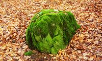 Moosbedeckte Steine im Wald
