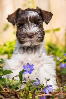 Cute puppy in a flower meadow