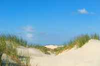 Sand dunes in summer