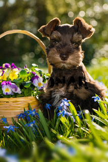 Cute puppy in a flower meadow