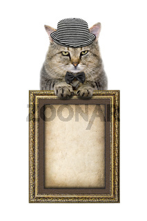 cat in a hat and tie butterfly relies on the picture frame isolated on white background
