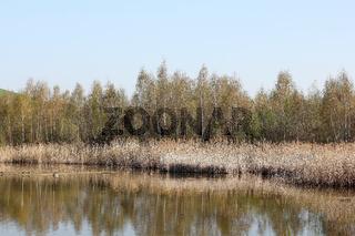 Kleiner Biotopsee am Fuß der Arkenberge in Berlin