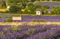 Lavendellandschaft mit verschiedenen Hütten in der Nähe des Dorfes Sault