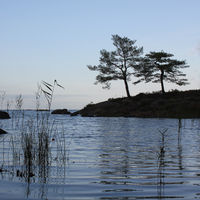 Two brothers. Trees on the shore of Lake Vanern. Sweden.