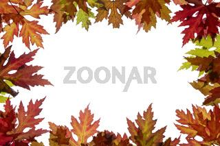 Ahornblätter mit Herbstfärbung und Textfreiraum