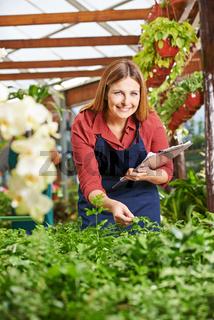 Gärtnerin in Gewächshaus bei Pflanzenzüchtung