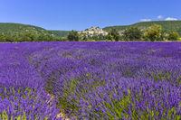 Lavendelfeld mit Dorf Banon