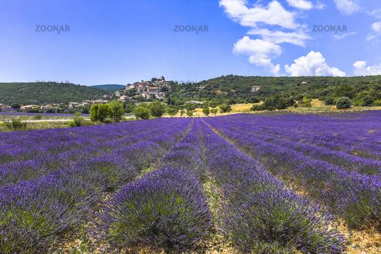 Panorama mit kleiner Ortschaft und Lavendel