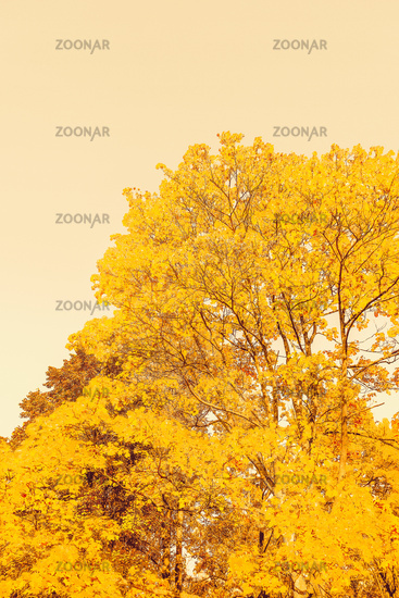 Beautiful autumn landscape background, vintage nature scene in fall season