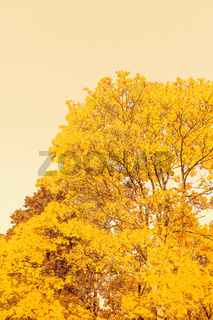 Beautiful autumn landscape background, vintage nature scene in fall season