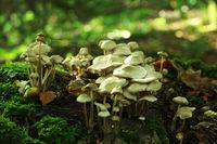 Pilze wachsen im Herbst im Wald