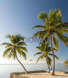 Tropical Island Beach With Hammock