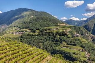 Vineyards near Bozen, South Tyrol
