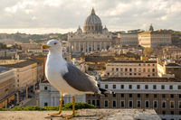 Seagull in Vatican City