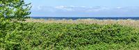 Blick auf den Horizont an der Ostsee mit blühenden Heckenrosen im Vordergrund in Zingst