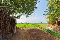 Green meadow, blue sky with few clouds framed by large green trees at traditional Egyptian village