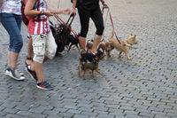 Fussgaenger mit ihren Hunden