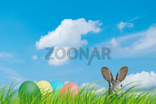 Hidden easter rabbit and easter eggs in a meadow with blue sky