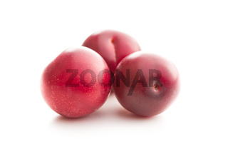 The red cherry plums fruit.