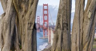 Golden Gate Bridge framed by Cypress Trees.