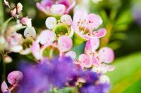 Roséfarbene Blüte mit schwacher Tiefenschärfe