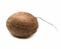 Coconut isolated on white background.Whole dry fruit