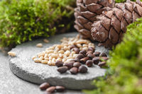 Pine cones, nuts and natural moss on a gray concrete background. Background image.