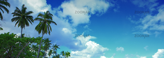 Palm trees and blue sky. Travel background.