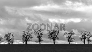A group of bare trees at the edge of the field