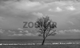 Der Baum am Meeresufer