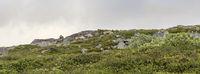 Rentiere in Norwegen an der Landschaftsroute
