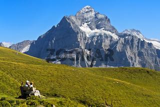 Im Wandergebiet Grindelwald First, Blick zum Gipfel Wetterhorn, Grindelwald, Berner Oberland,Schweiz