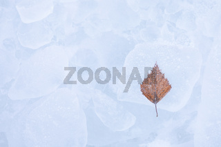 One birch tree leaf frozen on ice