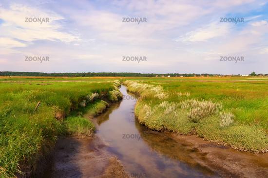Landschaftsimpression Salzwiesen