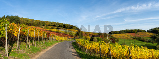 Indian summer on the red wine trail in the Ahr valley