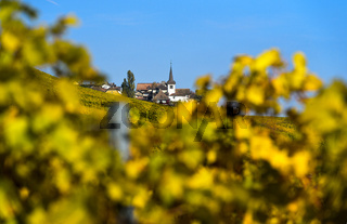 Winzerdorf Féchy-Dessus mit Kirche im Weinbaugebiet La Côte, Fechy, Waadt, Schweiz