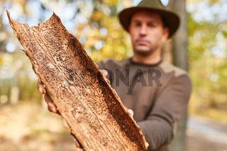 Forstwirt zeigt Baumrinde mit Schädlingsbefall