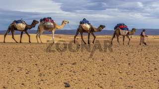 Crossing the Sahara with Camels