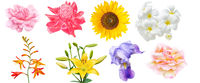 Assorted collection of flowers design set isolated on white background