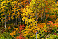 Colorful foliage of autumn in the forest